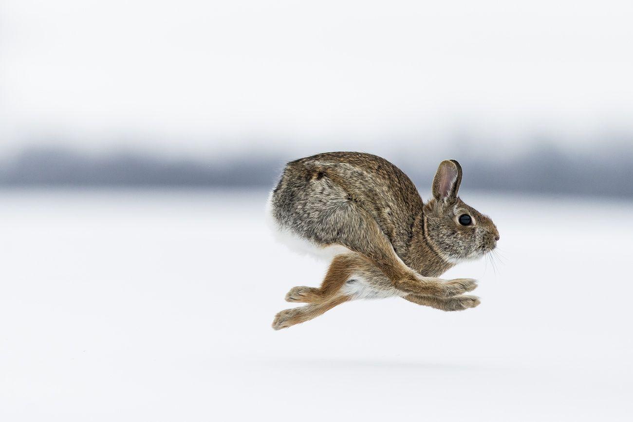 Fast shutter speed photo contest finalists dyr natur