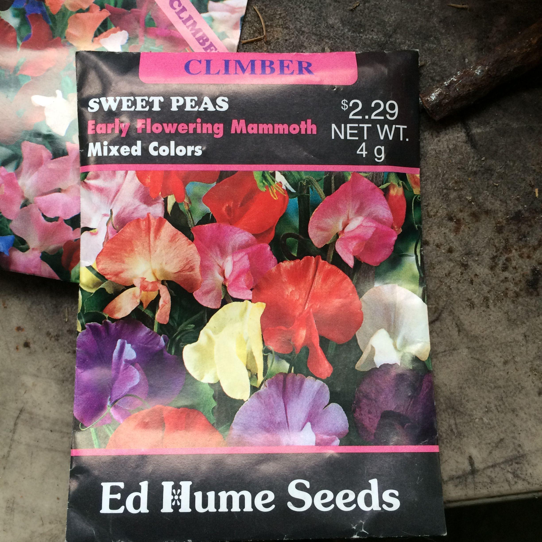 Sweet Peas ~ Climbing