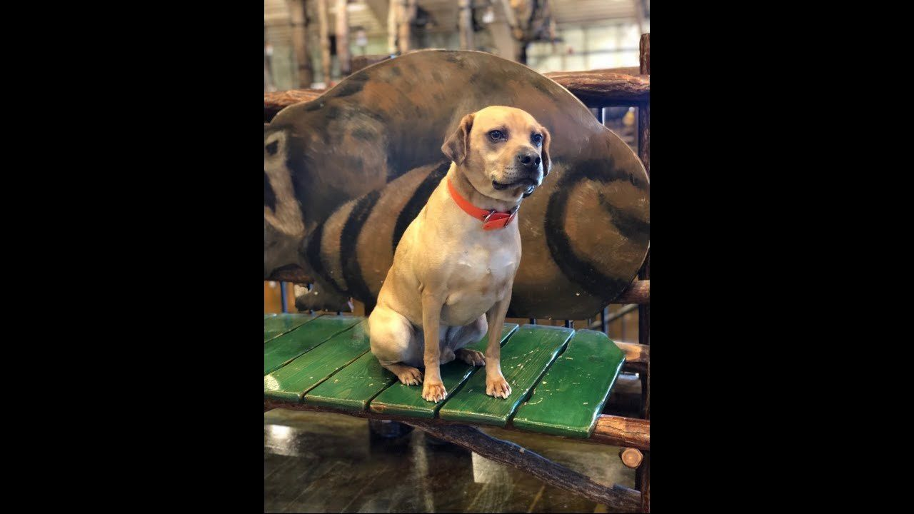 Owen Sharpei Beagle Mix Dog Training Omaha Nebraska Off Leash