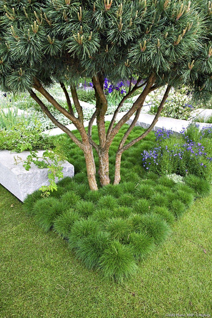 Les Plantes A Installer Sous Les Arbres Decor De Jardin Diy