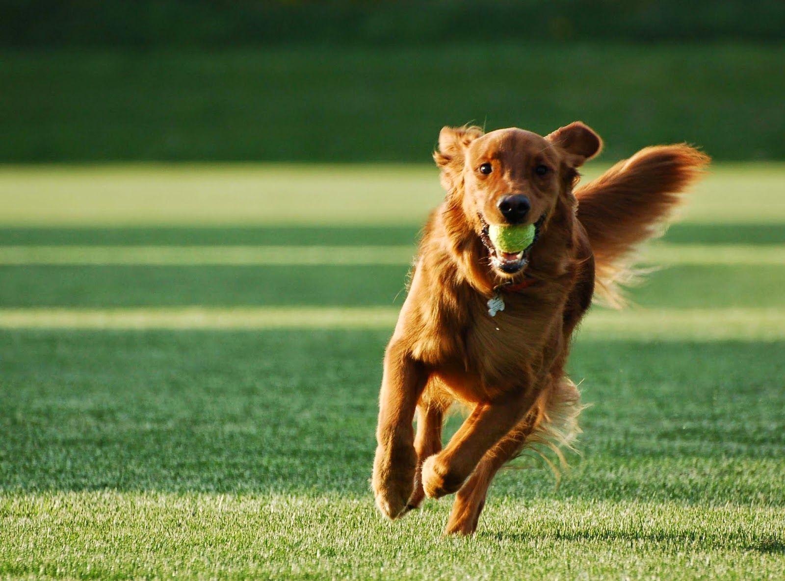 K9 Dog Obedience Training Sydney Australia First Aid For A Dog
