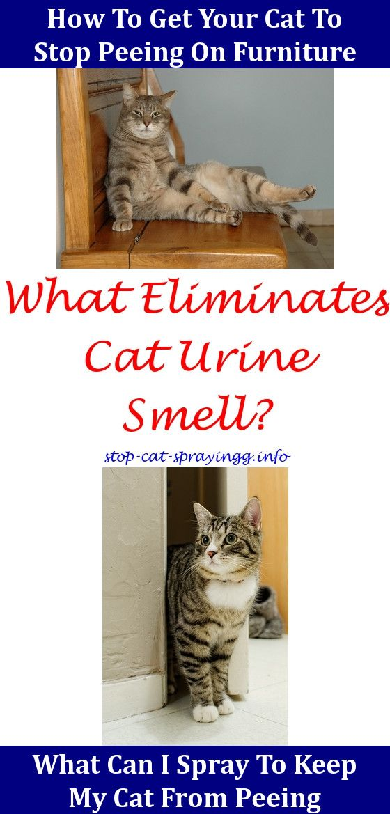Charmant Spray For Cats Cat Pee Smell Removal Life Hacks Cat Peeing On Rug Cat Urine  Out Of Couch Pee Smell How To Get Rid Of Cat Urine,neutralize Cat Odor.