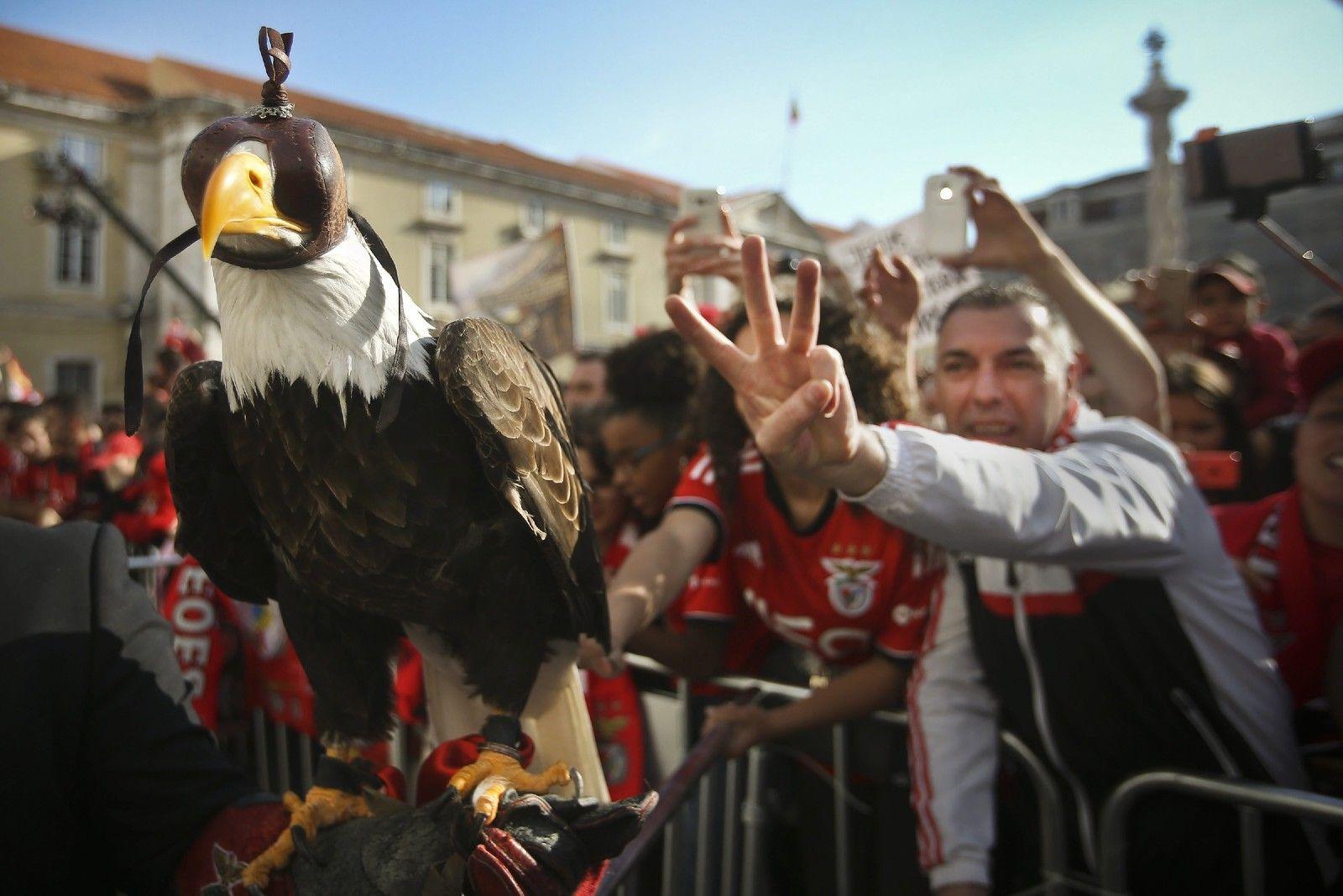 Benfica tricampeão recebido na CML