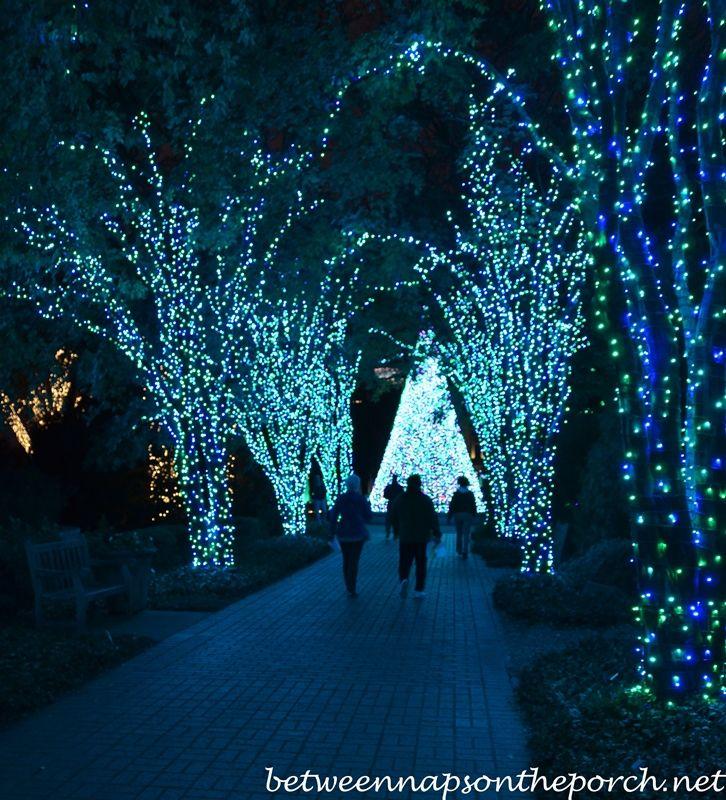 Botanical Gardens Christmas Lights Photo Albums