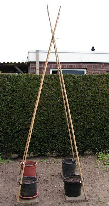 Photo of 39) Bloempotten met bonenstaken (in een kleine tuin)