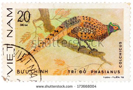 Pheasant Stock Photos, Images, & Pictures | Shutterstock