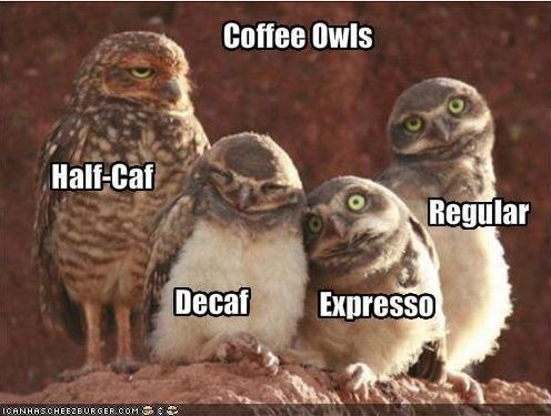 Coffee Owls Meme With Images Funny Owls Funny Animals