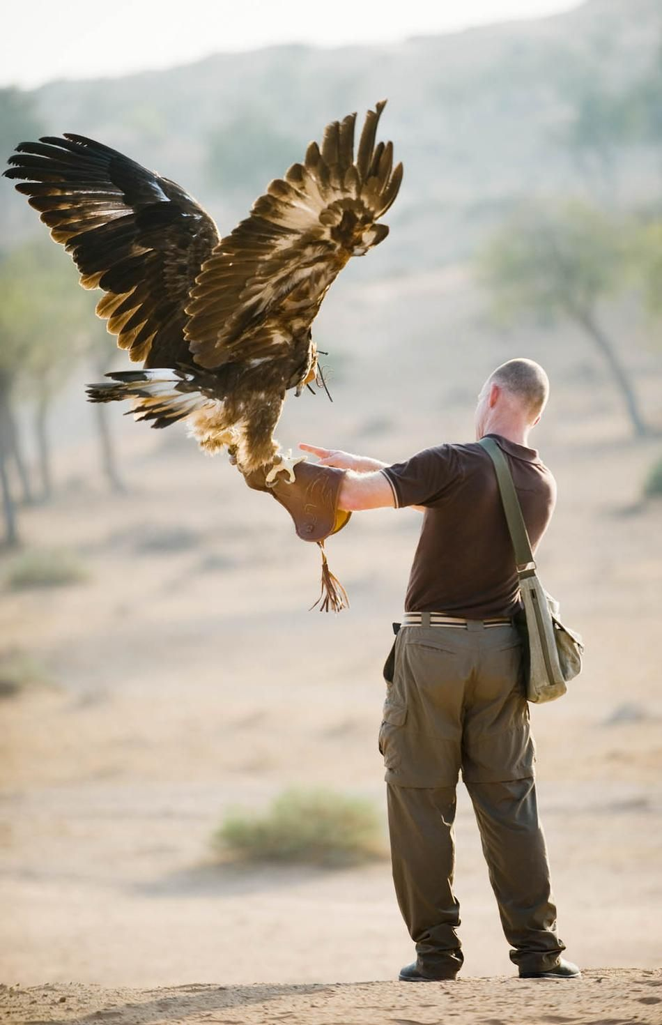 A Golden Eagle working with its trainer. Look at the size ...