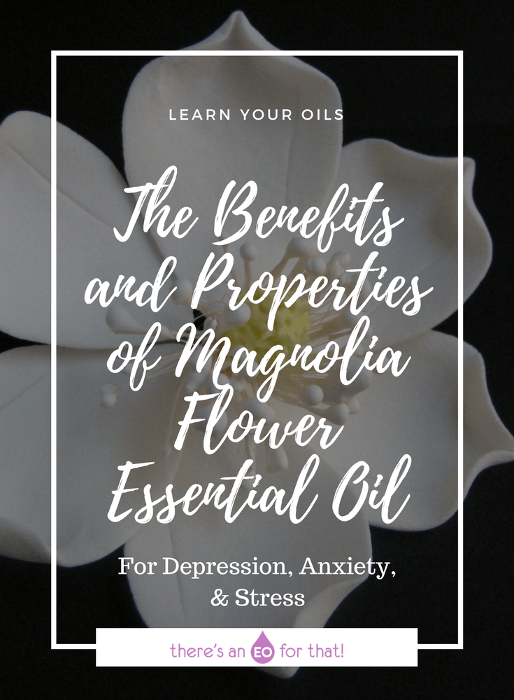 The Benefits And Properties Of Magnolia Flower Essential Oil Essential Oils Essential Oils Aromatherapy Best Essential Oils