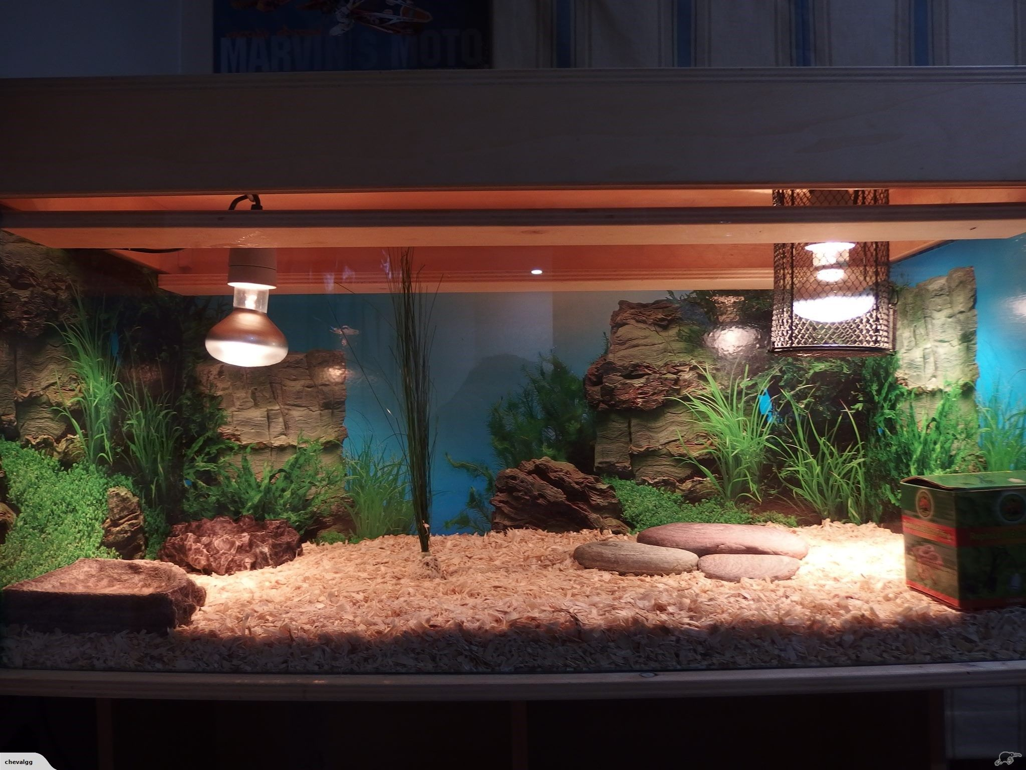 Reptile terrarium in great condition this tank was used for a blue