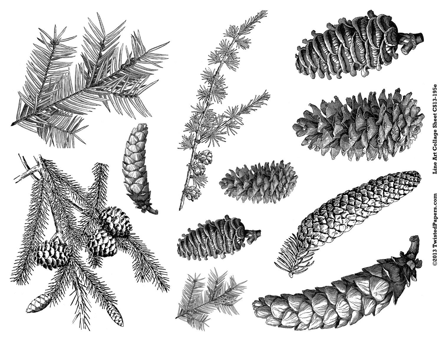 pine cone graphic - Google Search | side line | Pinterest ...