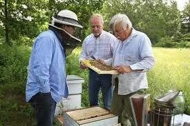 The Buzz About Bees - Center for Environmental Health