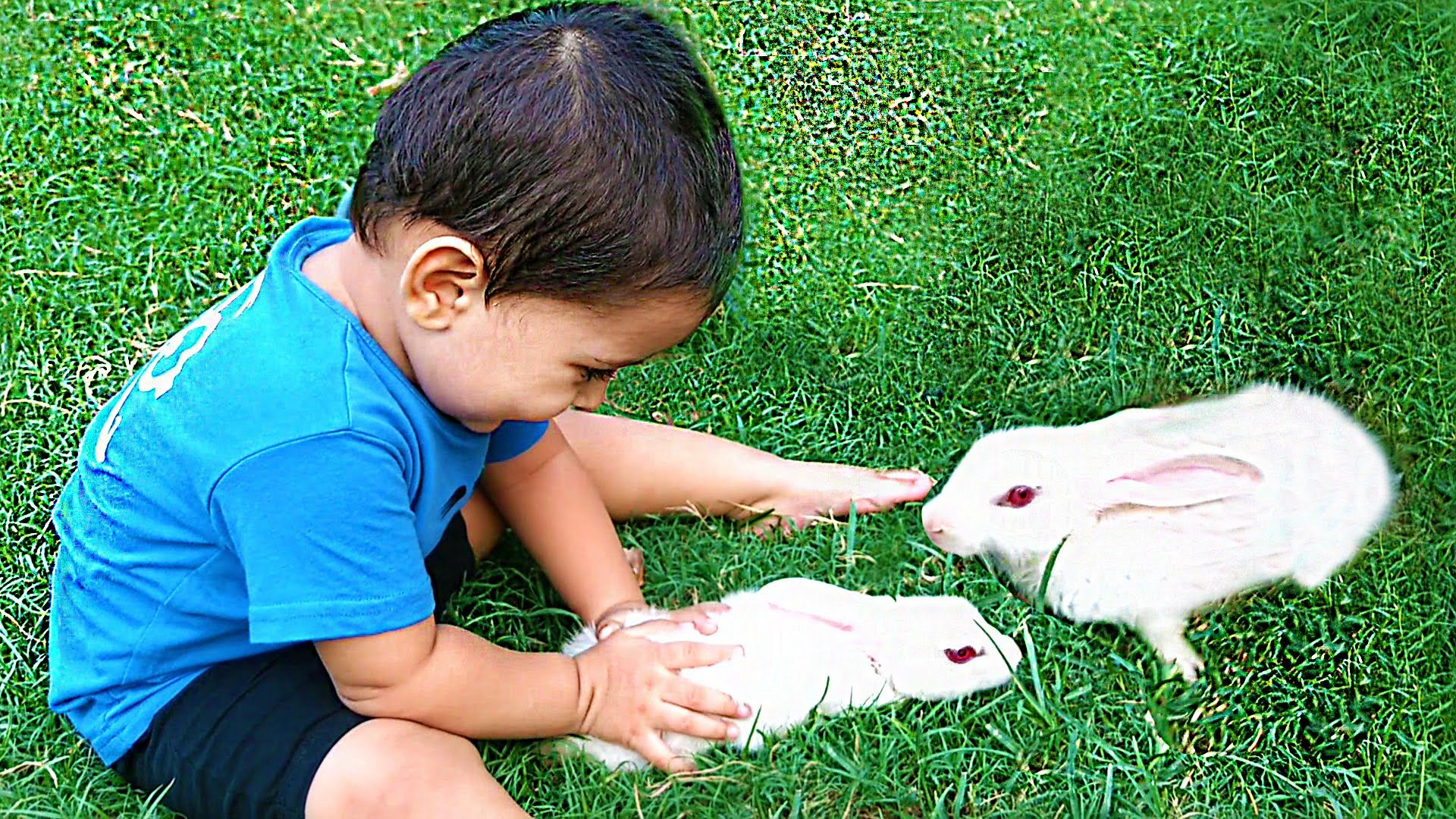 Baby Rabbits Playing With Kids Pet Rabbits For Children Pet Animals Animals For Kids Pet Rabbit Best Pets For Kids
