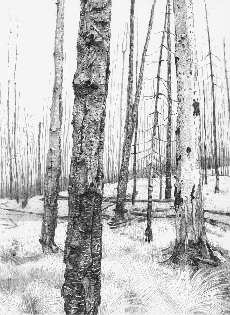 Burn Forest, 2006. Graphite on paper. Amy Talluto ...