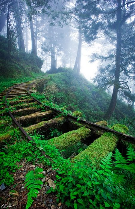 Ivy Covered Train Tracks, Japan