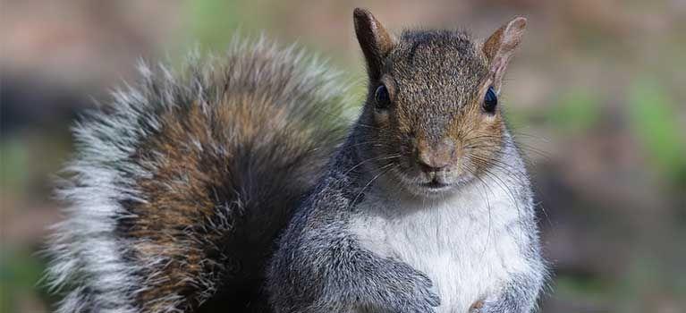 Caccia allo straniero per legge: per ora solo agli animali. A quando limitazioni per salvare le specie autoctone messe in pericolo proprio dalla caccia?