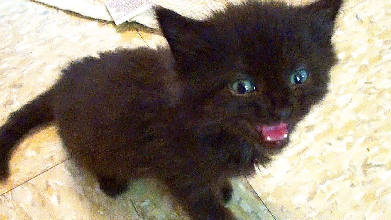 when cats talk..? I listen! Cute kitten gif, Adorable