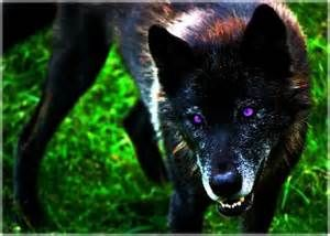Black Wolf With Purple Eyes Bing Images Black Wolf Wolf Beautiful Wolves