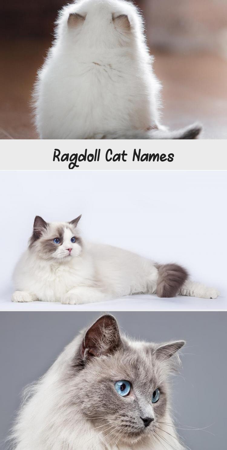 Ragdoll Cat Names Katzen Katzen Zitate Niedlich