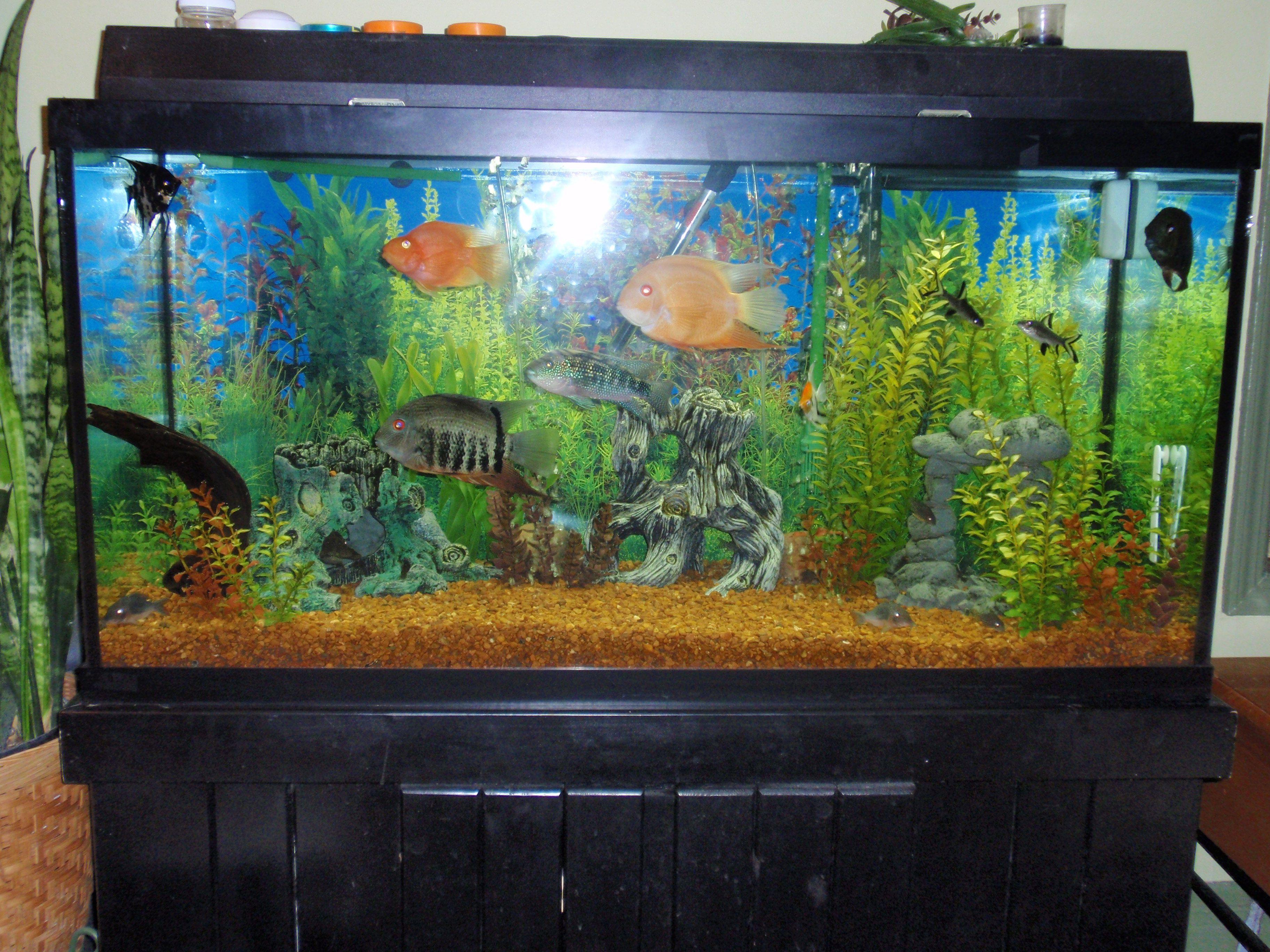 90 gallon fish tank google search aaron 39 s playroom for 4 gallon fish tank