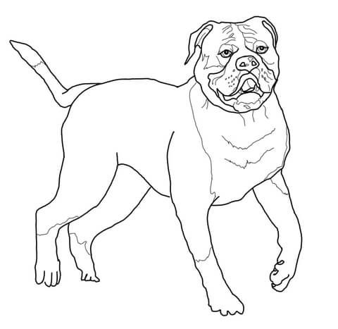 Kleurplaat Franse Bulldog Kerst American Bulldog Coloring Page Dog Art Coloring Pages
