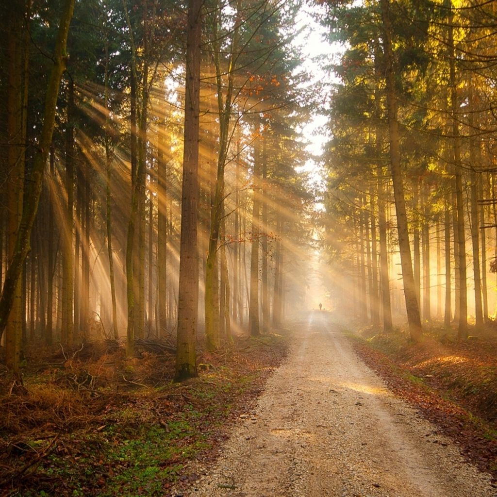 Loadpaper Com Forest Photography Beautiful Forest Tree Forest Wallpaper rays of light trees autumn