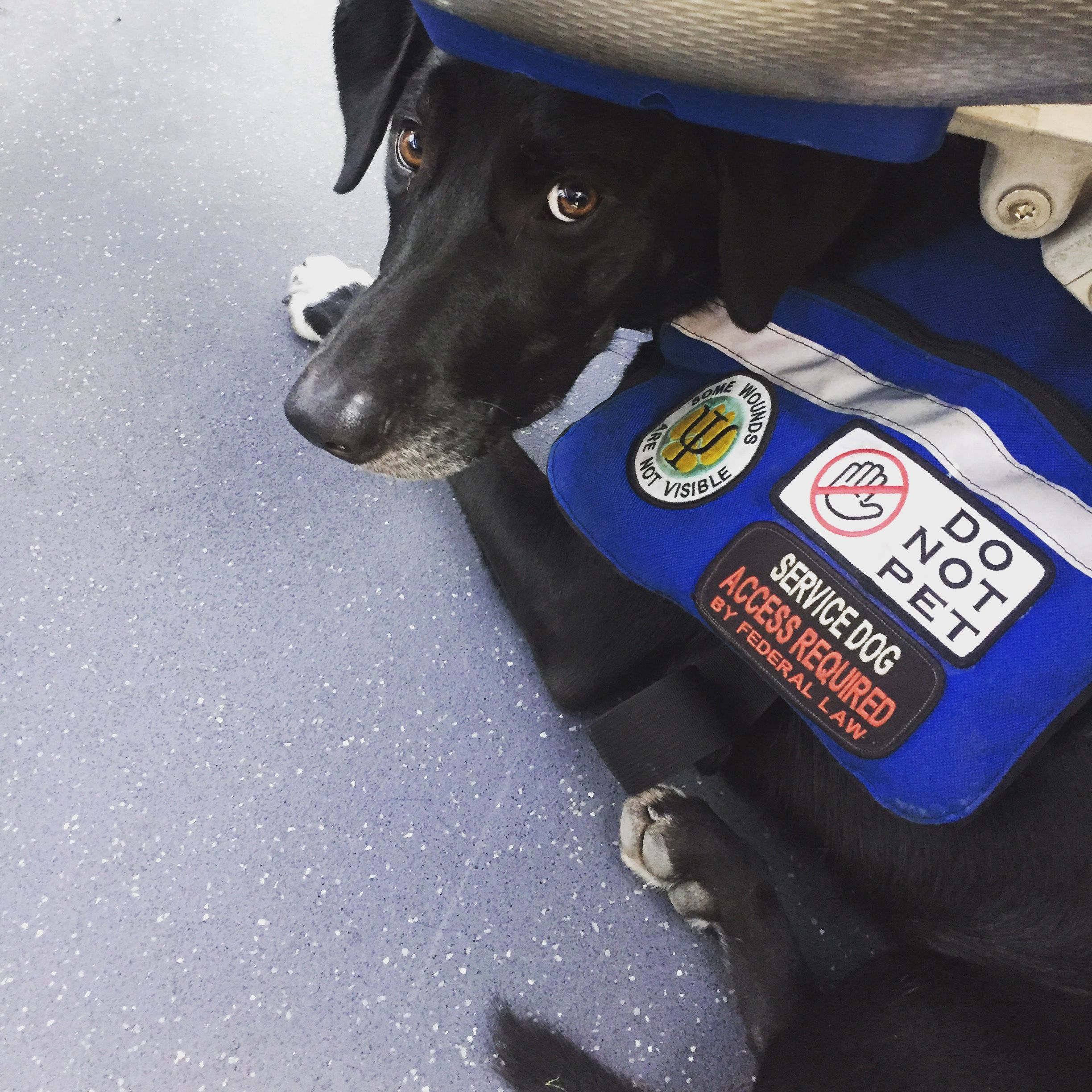 Pin on Adorable Service Dogs and Training Tips
