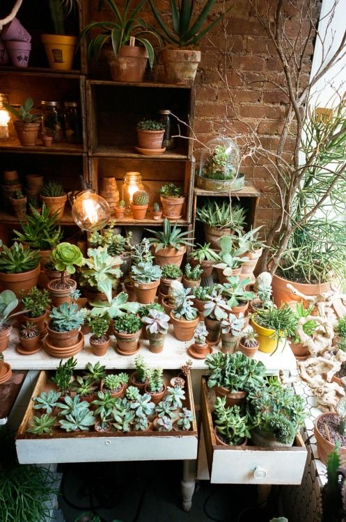 potted succulents + other plants on display | houseplants