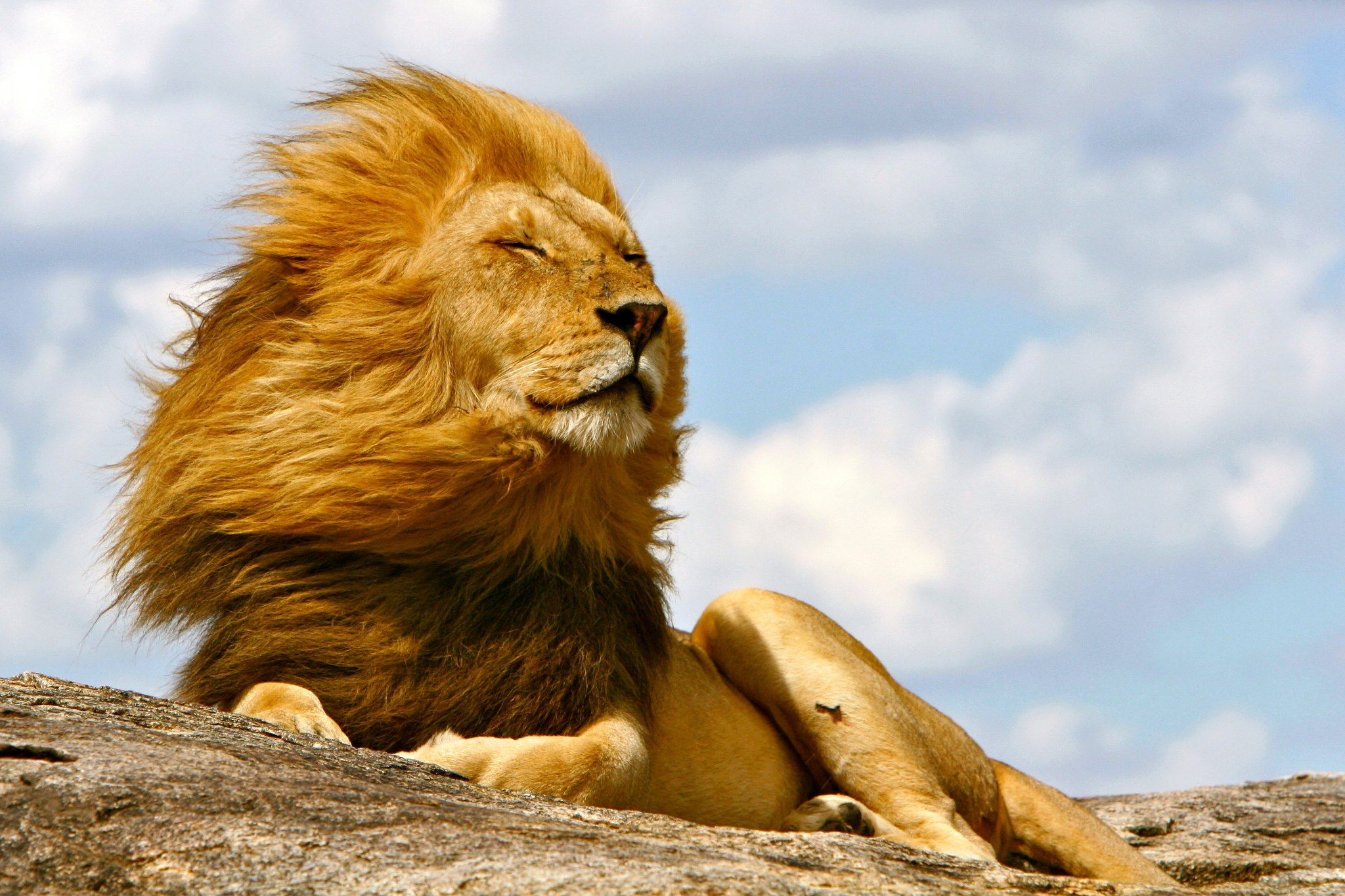 Aslan What A Majestic Looking Beast, Amazing Photo Really Captures