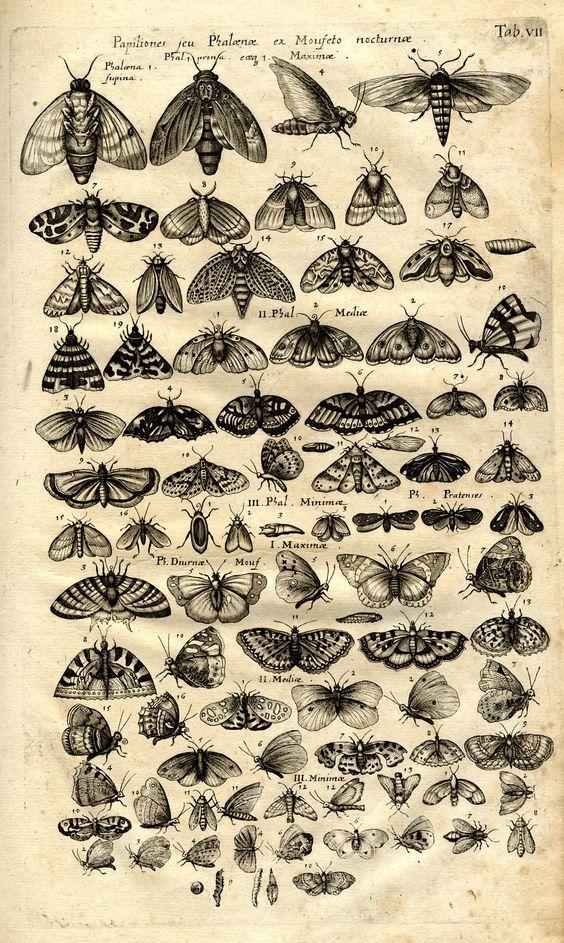 Epingle Par Danisaa Aedo Sur Ilustraciones Art D Insecte Illustration Vintage Dessins Botaniques