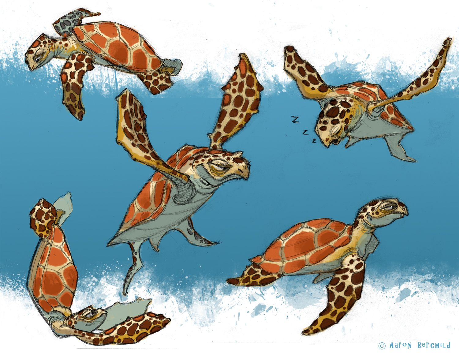 Sea Turtle Designs Sea Turtle Design Sea Turtle Reference In