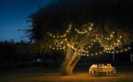 Trendy wedding garden dinner fairy lights 60+ Ideas #fairylights