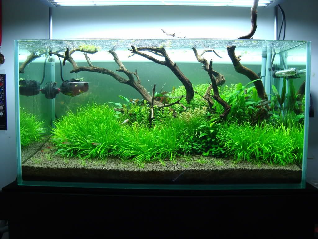 Lovely Aquatic Plant Rimless Aquarium   Google Search