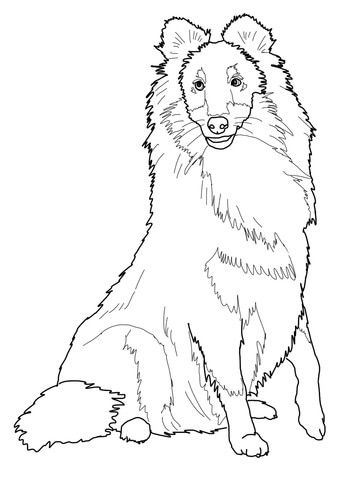 Sheltie Shetland Sheepdog Coloring Page Dog Coloring Page