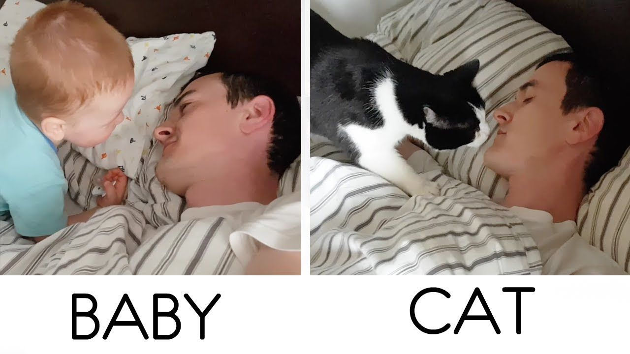 How They Wake Up Daddy In The Morning Sick Pets Baby Cats Kitten Care