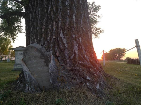 15 Fascinating Funeral Photos. Grave stone overcome by the powerful growth of a tree. Nice visual of Isaiah 25:8.