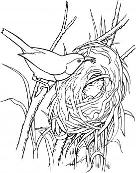 Wren Bird Build A Nest Bird Coloring Pages Coloring Pages Bird