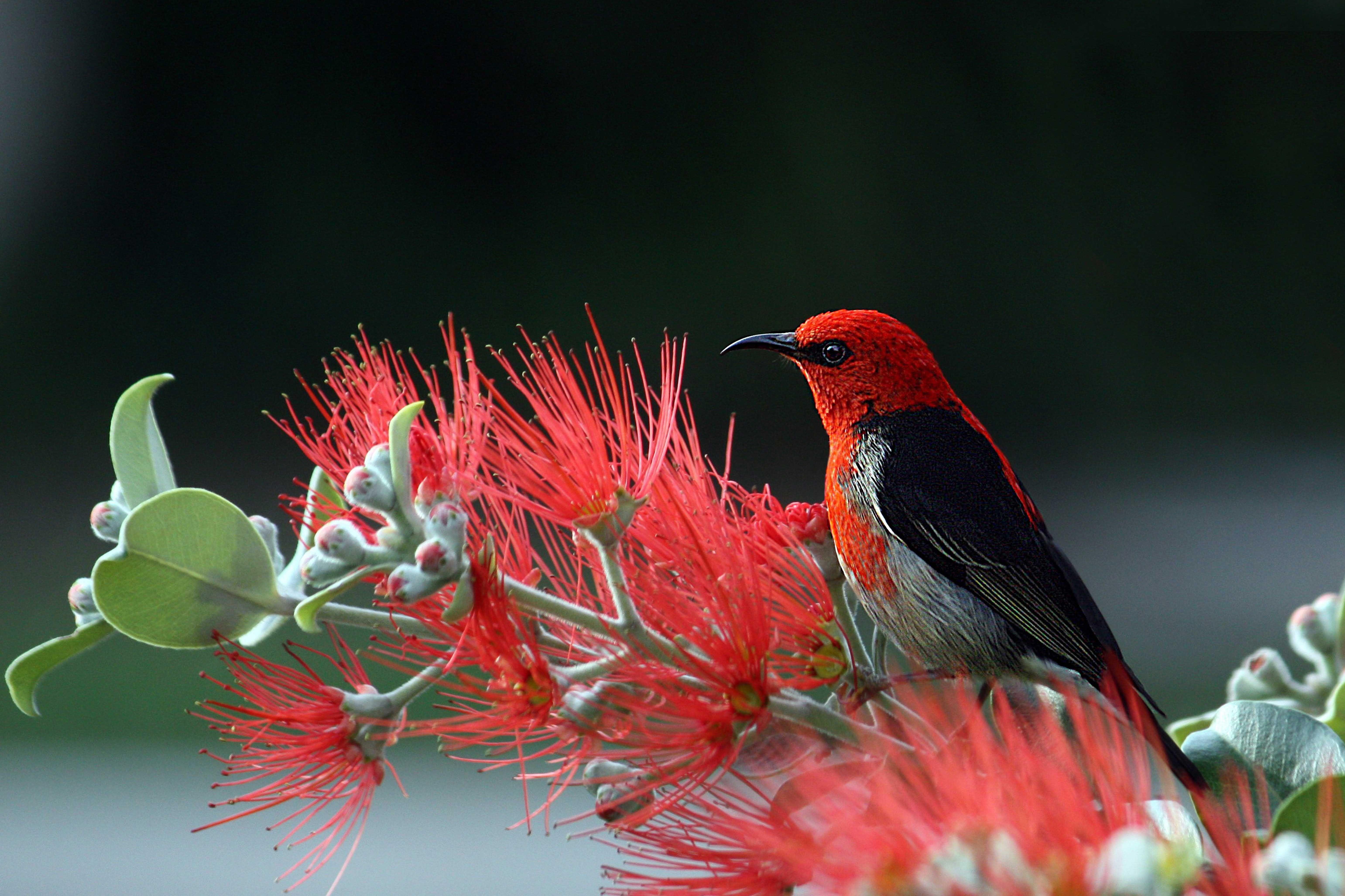 Human And God Nature Pictures Beautiful Birds Laptop Wallpaper