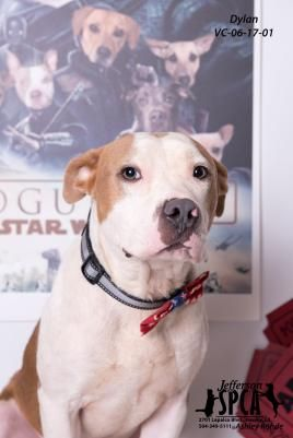 Adopt Dro On Pitbulls Rescue Dogs Dogs Puppies Beautiful Dogs
