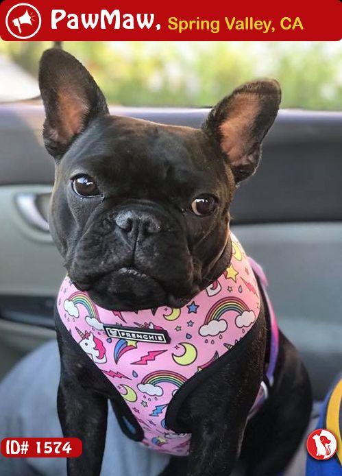 Species Dog Color Black Gender Female Breed French Bulldog