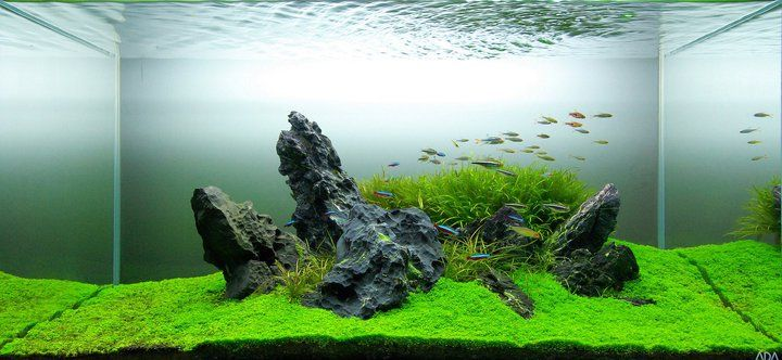Great simplistic idea fish aquariums pinterest for Natural fish tank