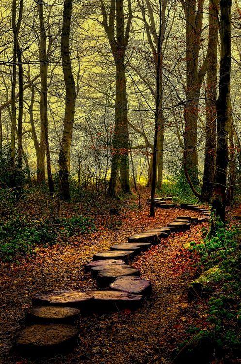 foto de autumn path… via pinterest (avec images)   Paysage automne ...