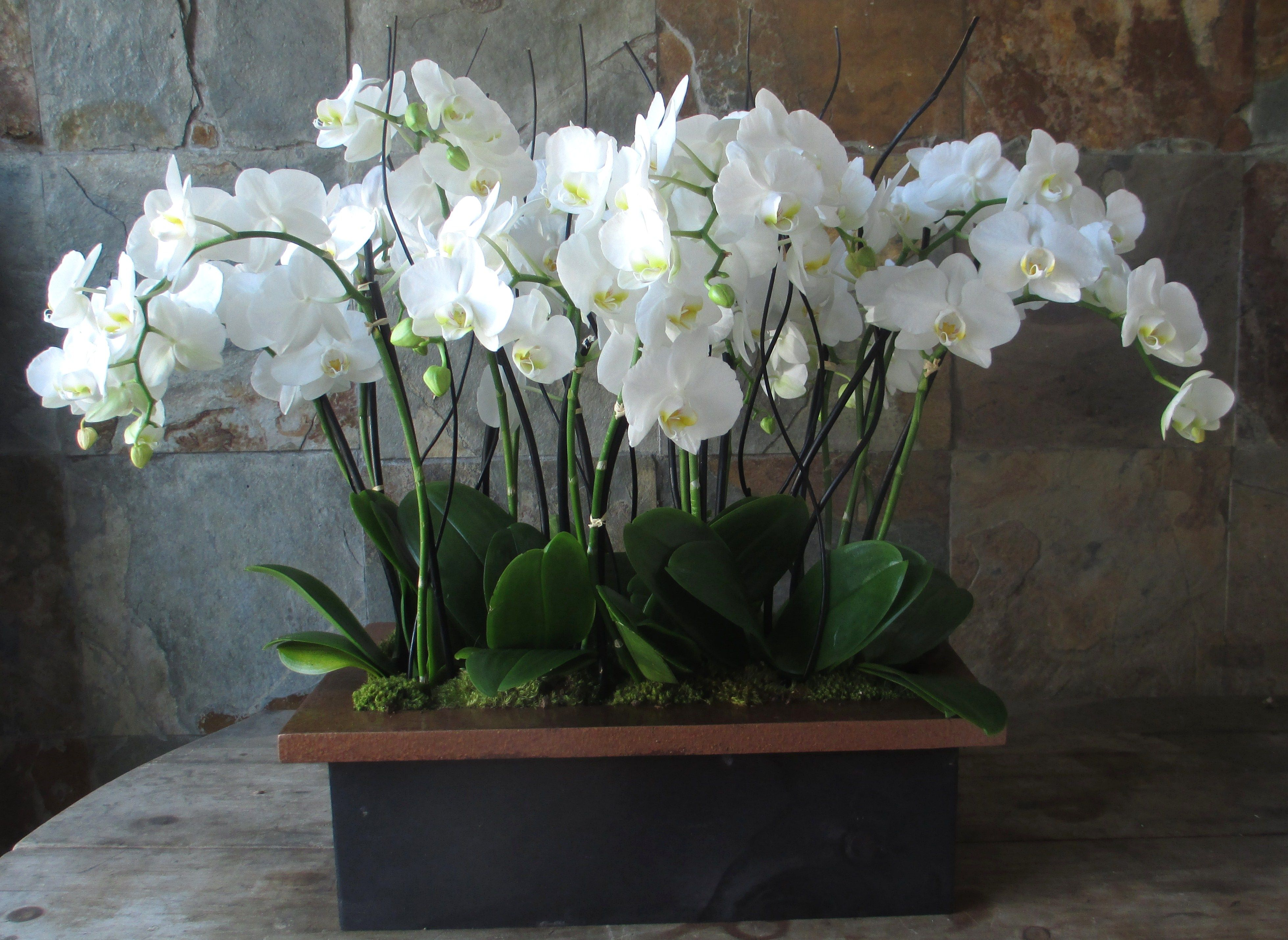 best orchid house plants. Massive short Phalaenopsis orchid plants in an elegant wooden box  Great for foyers entry 14 best and arrangements images on Pinterest