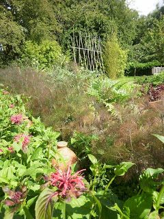 contrasting foliage of fennel and calaloo