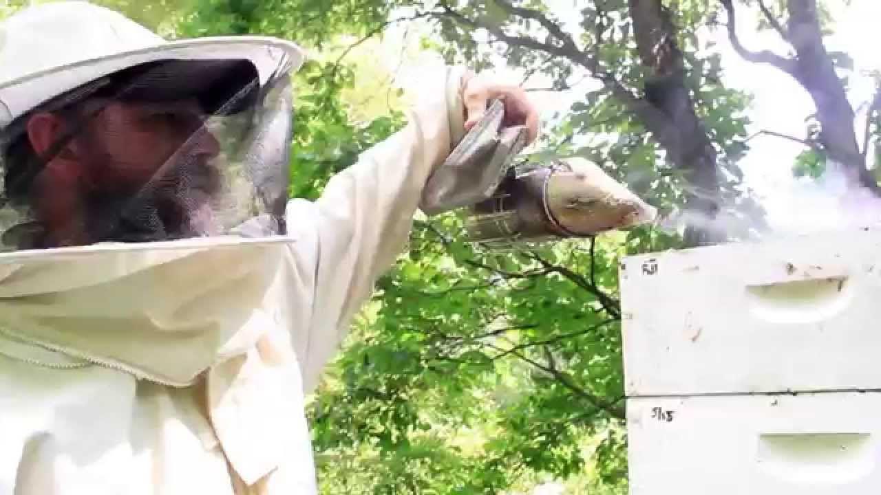 Jon Christie, owner of Wild Mountain Bees, explains hive