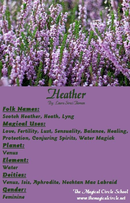 Heather Magical Properties The Magical Circle School Www Themagicalcircle Net Magic Herbs Herbal Magic Witch Herbs