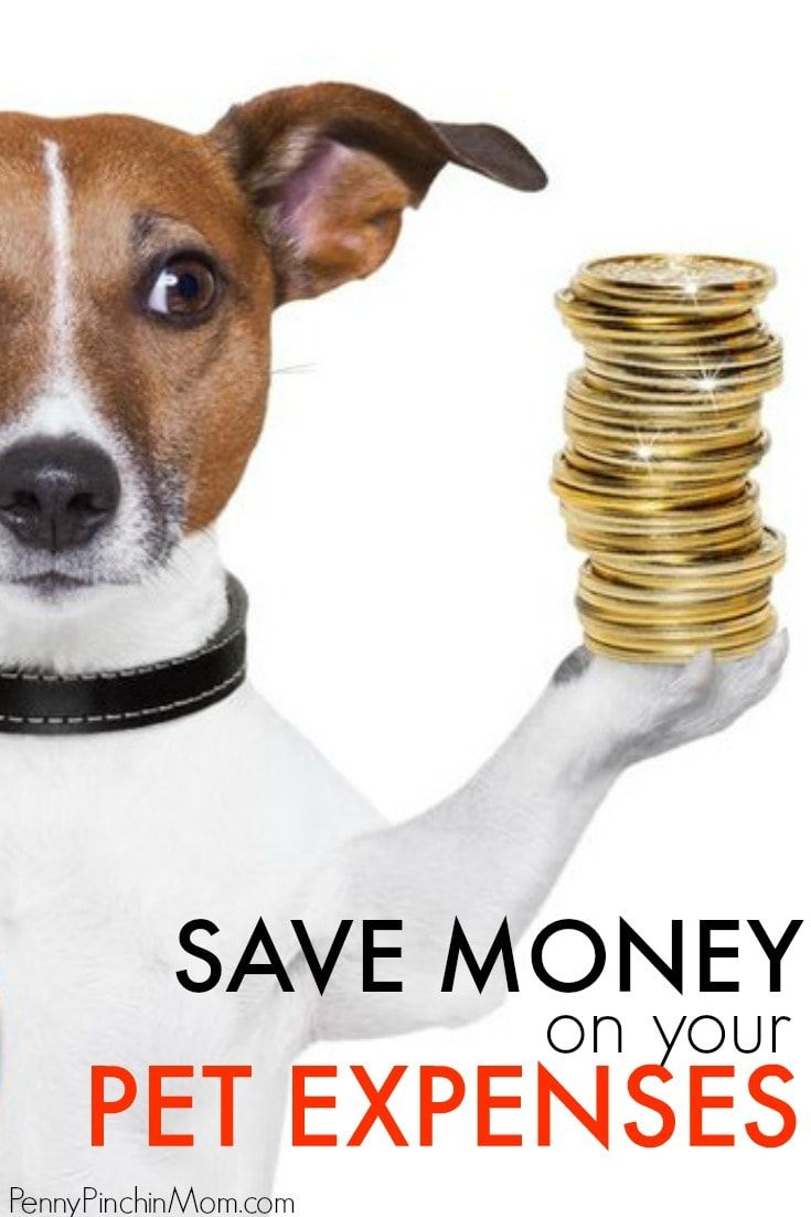 How to Save Money on Pet Expenses Best money saving tips