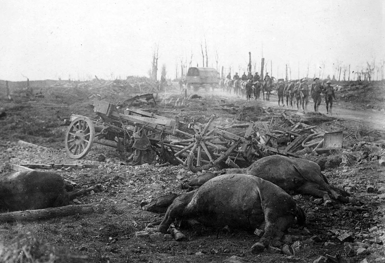 Animals In World War One 1914 1918 World War One World War I World War