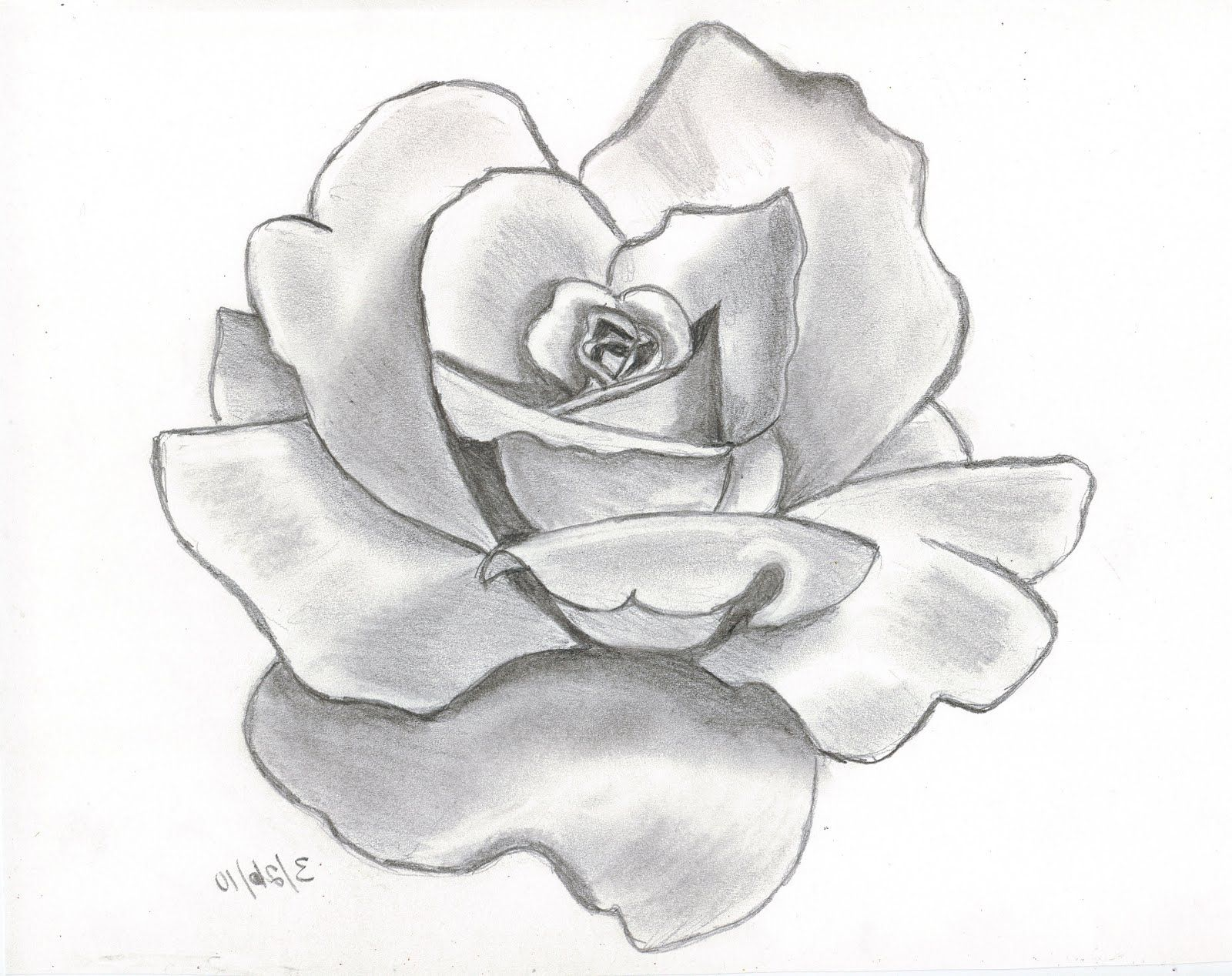 Flower drawing rose drawing a rose flower easy drawing for Easy to draw roses for beginners