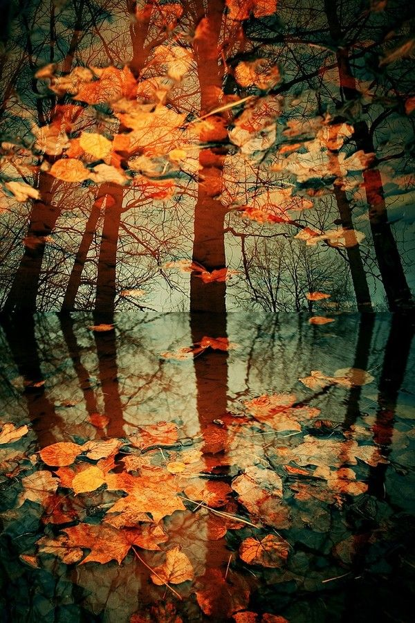 Autumn Fall Harvest Dream Reflections Trees Leaves Beautiful Nature Nature Photography Nature